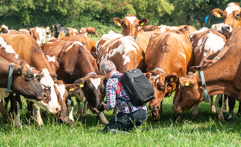 Going through the shooting brief with my subjects - cow photography